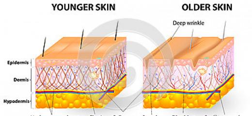 Collagene e struttura della pelle: perchè questo elemento è così importante?